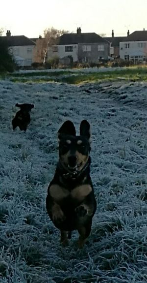One frosty morning onr excited dog Domestic Animals First Eyeem Photo