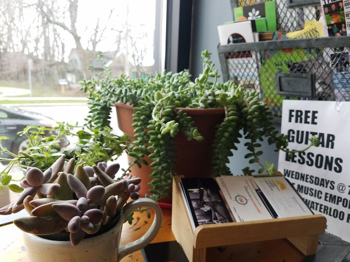 Free guitar lessons! Potted Plant Growth No People Indoors  No Edit/no Filter EyeEmNewHere Details Cafe America Decor Succulents