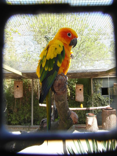 Take by Pellemeule with Samsung WB700 Animal Bird Colored Colour Of Life Pellemeule Peroquet Plume Zoo Animals