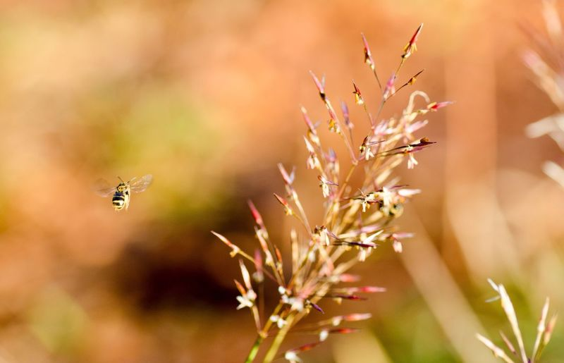 Honey bee buzzing by plant