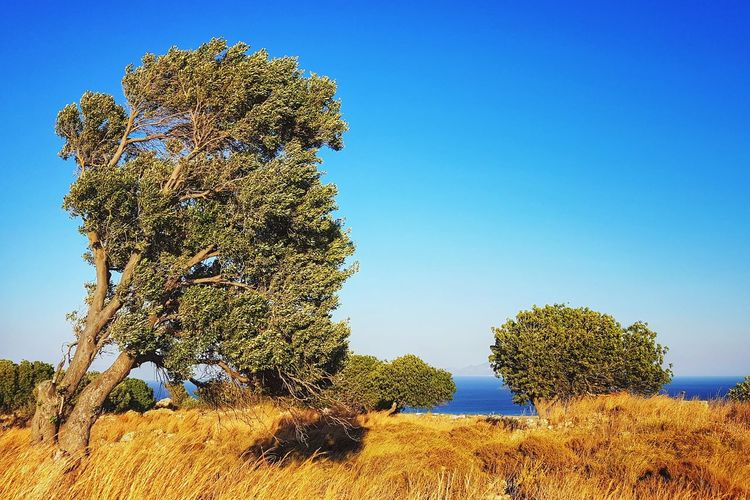 mediterranean landscape Windy Greece Mediterranean  Mediterranean Landscape Bushes And Trees Bushes Bush Tree Bluesky Mediterranean  Climate Tree Sky Scenics Tranquil Scene Countryside Remote Non-urban Scene Arid Climate