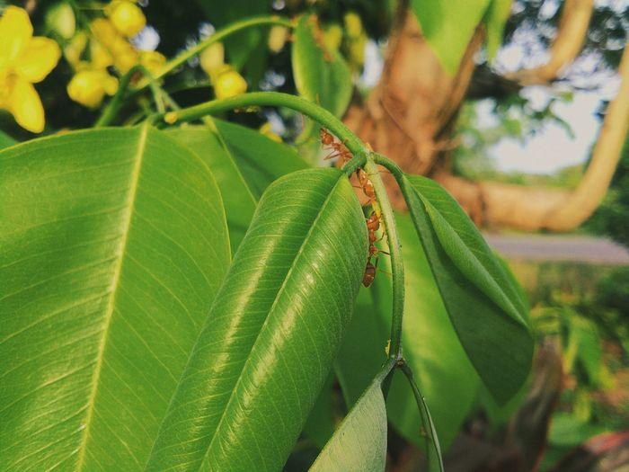 Ant Ant Ants