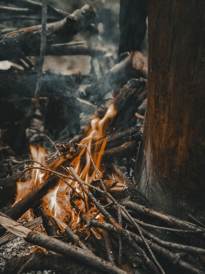 Close-up of bonfire by tree trunk in forest