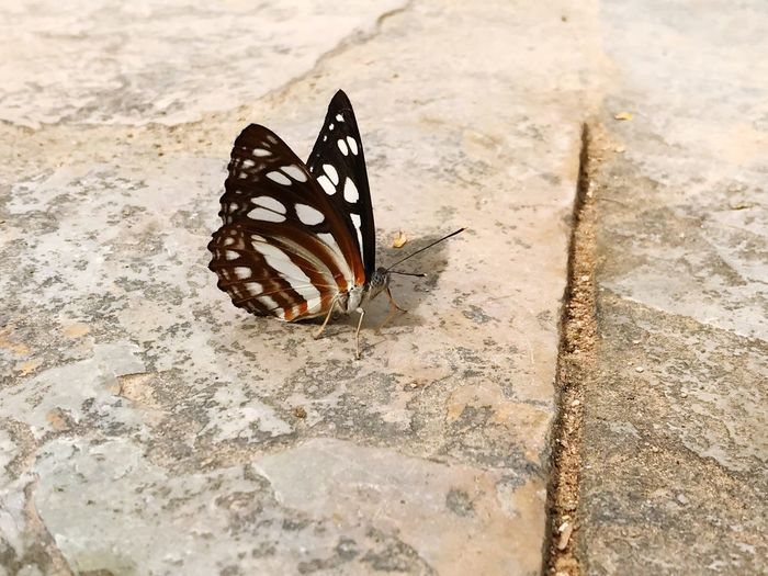 High angle view of butterfly on sidewalk