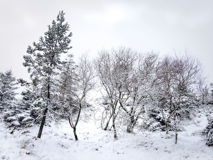 A snowy scene at... Combawn Ireland Hiking Tree Snow Cold Temperature Winter Rural Scene Forest Pine Tree Pinaceae Branch Frozen Spruce Tree Coniferous Tree Foggy Fir Tree Polar Climate Snowdrift Snowing Growing Frost Pine Woodland