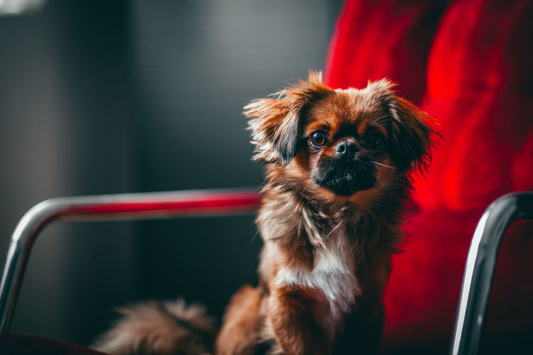 Portrait of dog sitting on chair