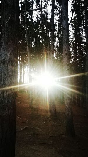 El Canelo Chile♥ Tree Sunbeam Nature No People Sunlight Outdoors Beauty In Nature Forest