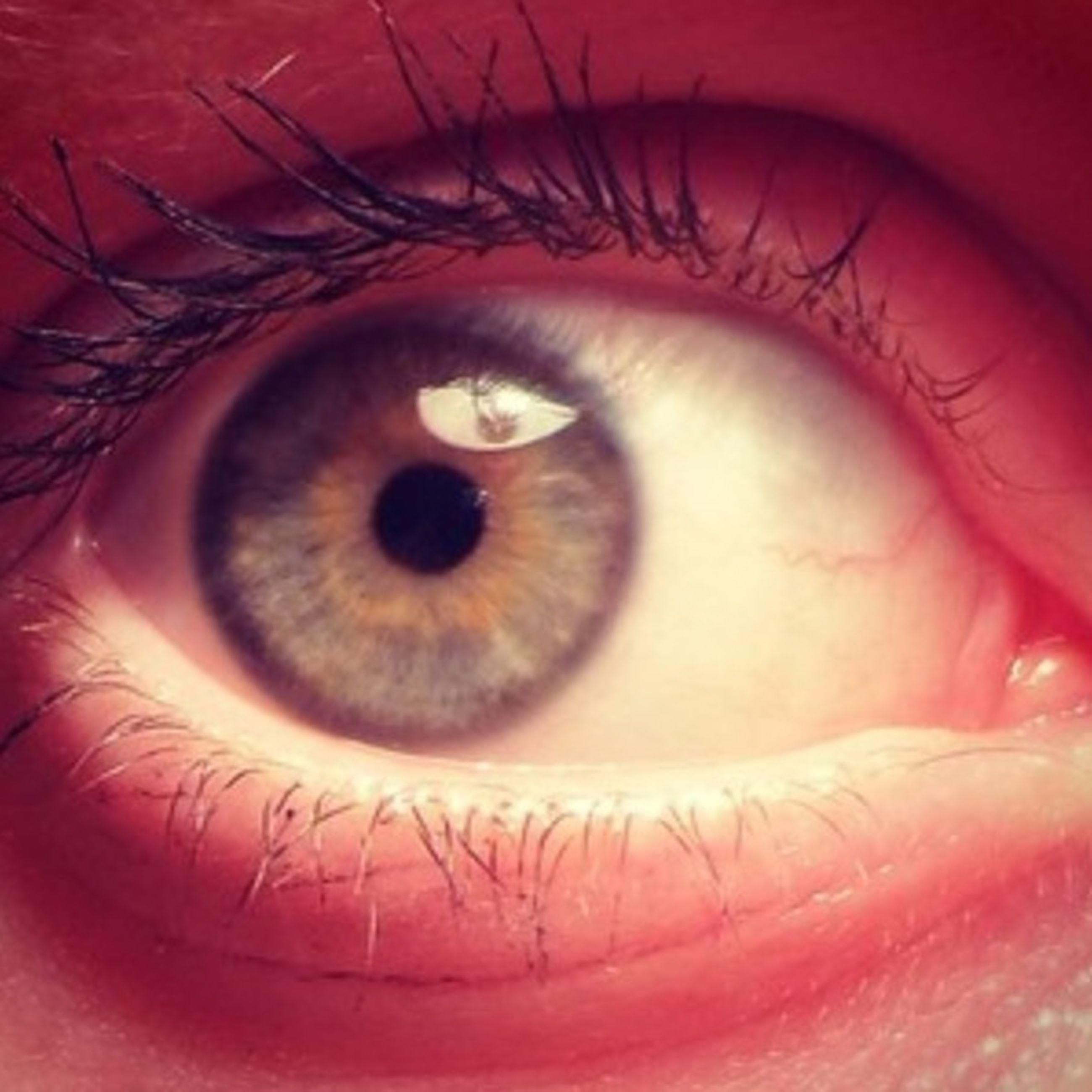 eyelash, human eye, close-up, eyesight, extreme close-up, part of, sensory perception, looking at camera, portrait, indoors, eyeball, iris - eye, red, human skin, human face, extreme close up, person