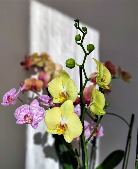 Multi orchids