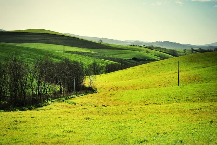 Landscapes With WhiteWall Landscape Tuscany Italy Greenfields Early_spring Fence Line Columns Layers Hills Hillside Bare Trees Landscape Layers