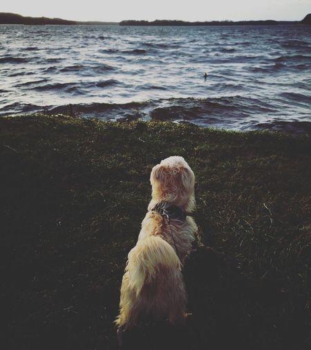 Dog looking at windy and wavy sea shore