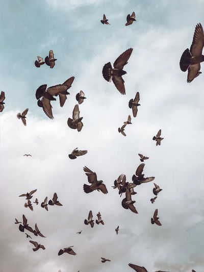 Low angle view of pigeons flying