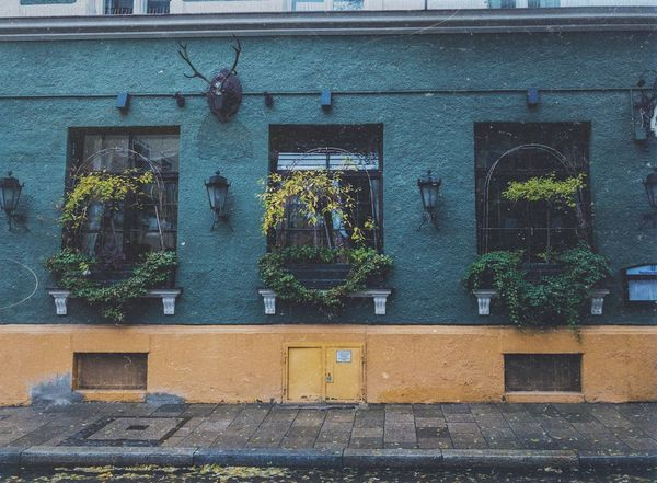 Window Green Architecture Building Exterior Built Structure Outdoors No People Day Plant Munich Outdoor Photography Old Buildings Old Vscocam Germany