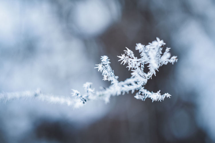 Exceptional Photographs Silhouette Bokehlicious Bokeh Love Poland Zima EyeEm Nature Lover Eeye Snowflake Snow Winter Cold Temperature Tree Ice Close-up Sky Ice Crystal Snowing Frozen Blooming