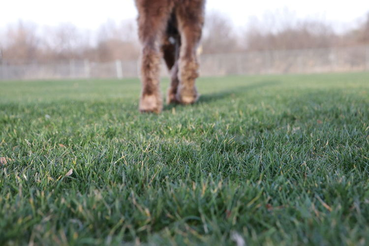 View of a dog on field grass feet