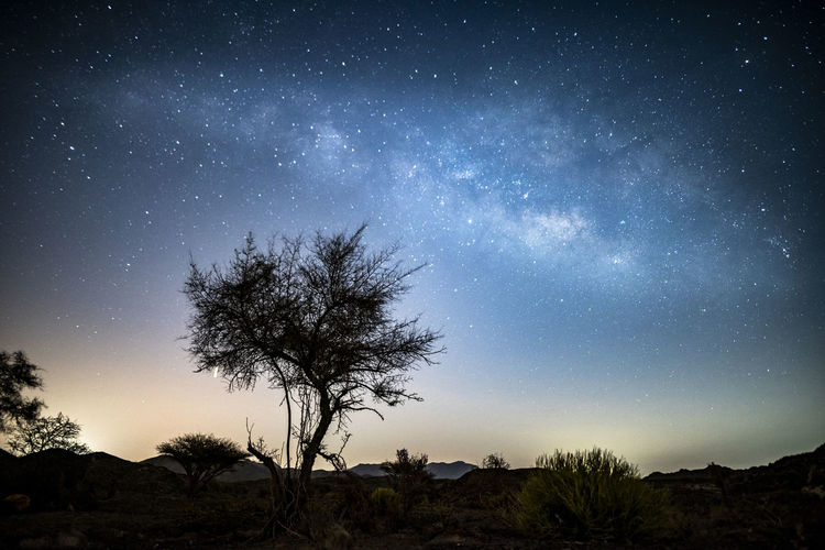 Silhouette tree against star field at night