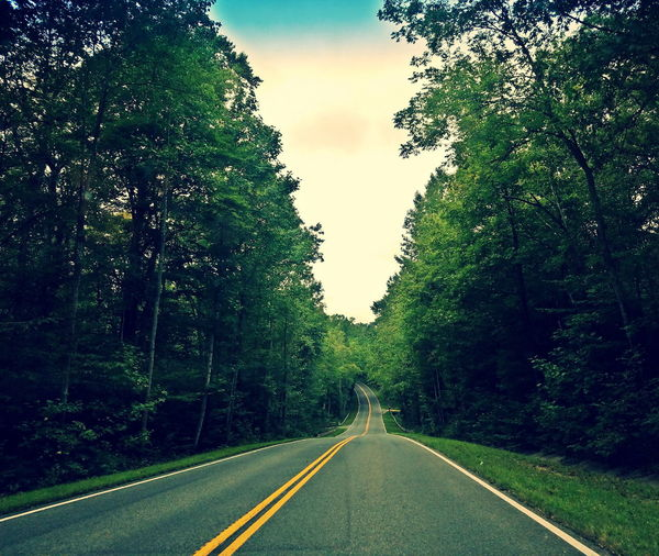 Tree Road Nature Long Road Home Tranquility Tranquil Scene Roadscenes Treelined Beautiful Treescape Longrides Roads