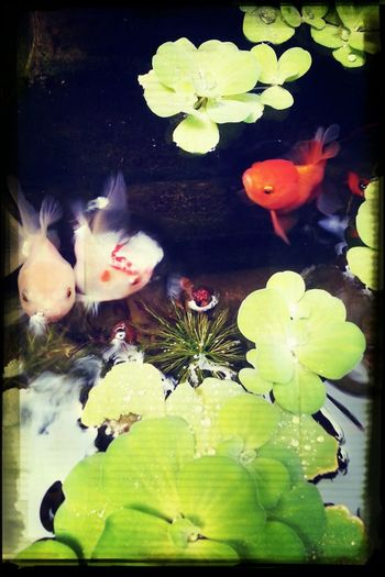 home pond Relaxing Good Things Come In Small Packages With Lightcase