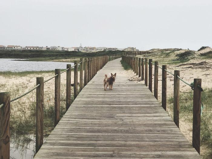 Dog on wooden pier