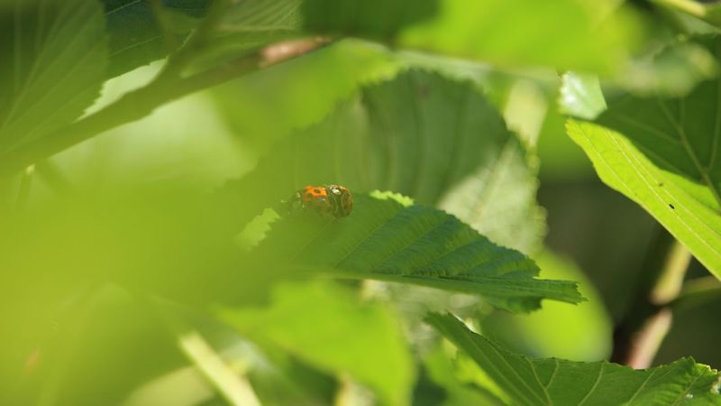 Ladybug Ladybugs Ladybirds Ladybird Insect Insect Photography Insect Paparazzi Outdoor Photography
