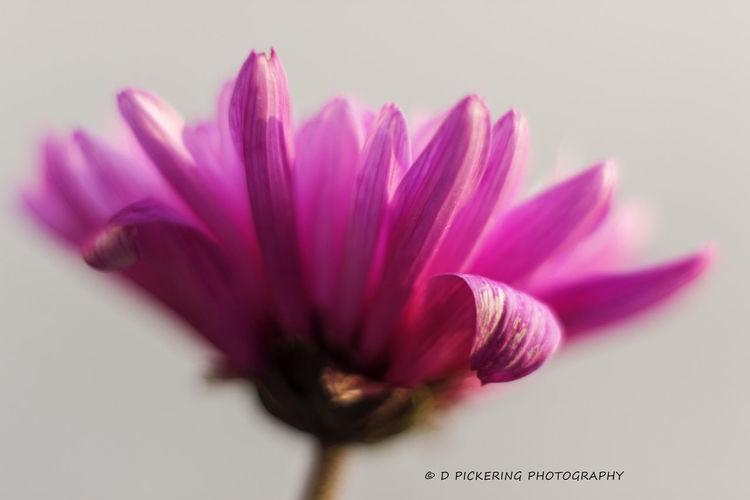 Flirt... EyeEm Nature Lover Flowerporn Macro_collection Flower Collection