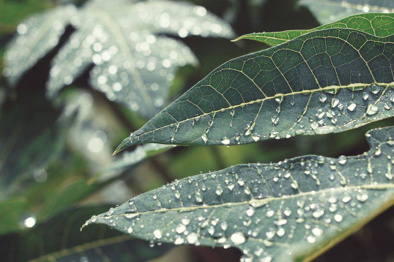 High angle view of dew drops on leaf