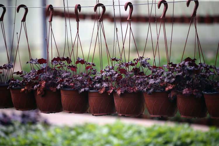 Close-up of potted plants hanging on field