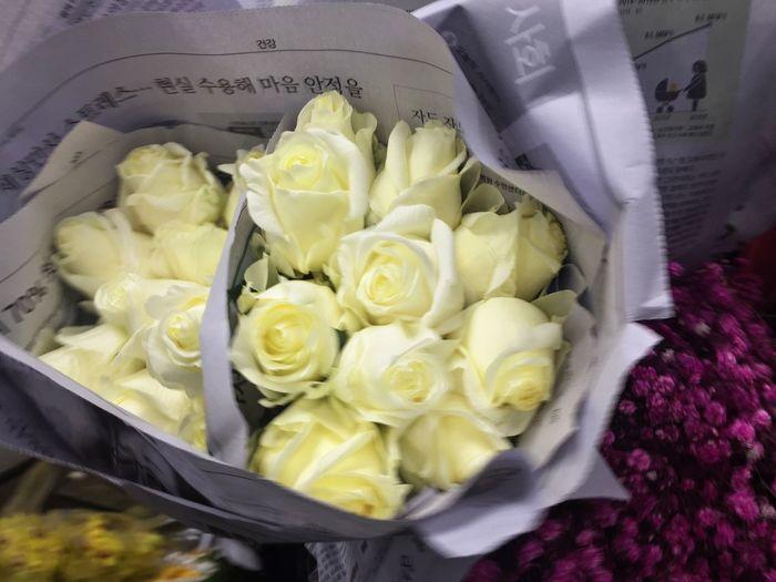 꽃 꽃다발 하얀꽃 흰꽃 장미꽃 장미 Flower No People White Whiterose Whiteflower Foto Photo Love Korea Rosé Give