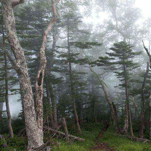 #山 #トレッキング #八ヶ岳 #森 #自然 #mountain #trekking #yatsugatake #green #forest #mist #nature #naturelovers Nature Green Mist Forest Trekking Mountain Naturelovers 自然 トレッキング 森 山 八ヶ岳 Yatsugatake