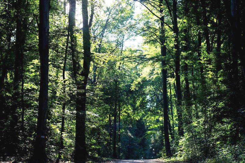 Greenery Nature Stadtwald  Tree Porn Glitch Bike Ride Lighting Shadow