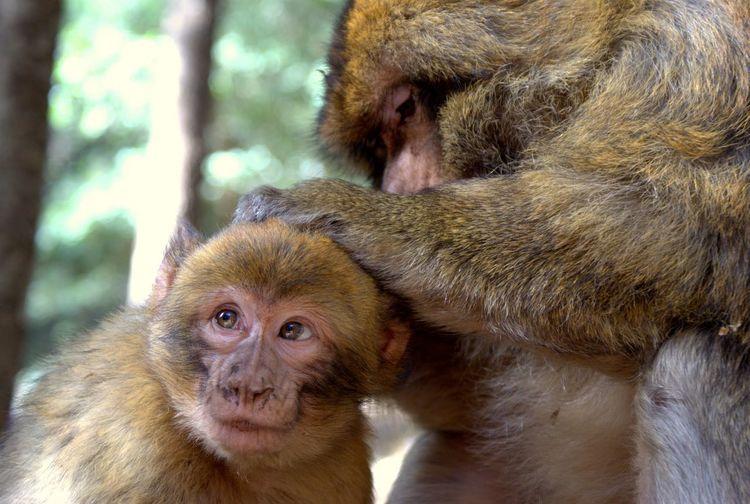 Monkeys in the