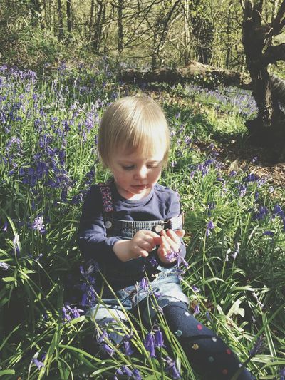 Bluebell adventures Front View Baby Real People Childhood Cute One Person Grass Babyhood Lifestyles Leisure Activity Tree Outdoors Babies Only Nature Day Bluebell Wood Bluebell Bluebells Bluebell Woods Toddlerlife Toddler  Toddler Girl Cute Girl Forest WoodLand