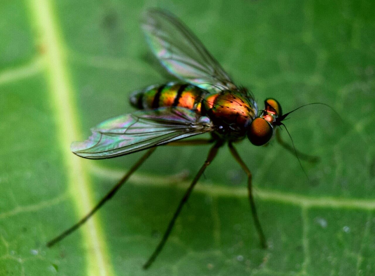 insect, animal themes, animals in the wild, one animal, green color, no people, nature, close-up, day, outdoors