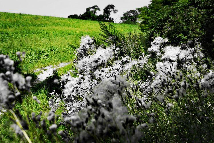 Tree Rural Scene Agriculture Field Grass Landscape Green Color Plant Sky