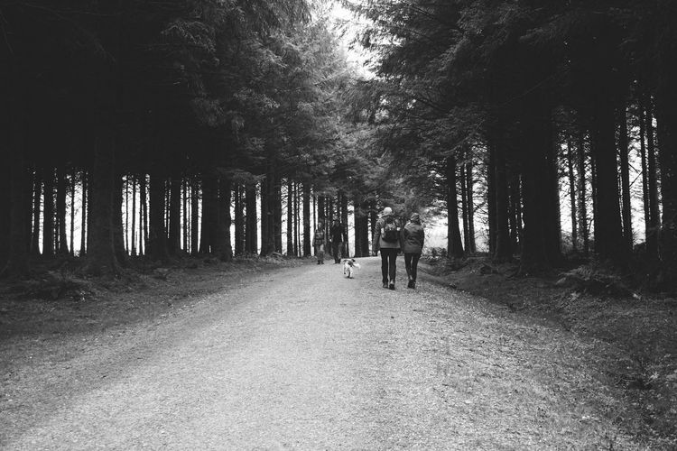 People walking on road in forest