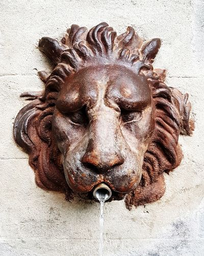 Close-up of lion statue against wall