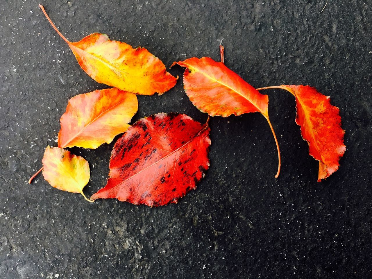 High Angle View Of Fallen Orange Autumn Leaves On Street