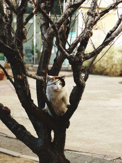 Sheep sitting on tree trunk