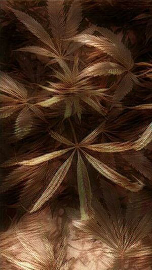 Backgrounds Close-up Abstract Leaf Nature No People Green Color Dried Plant My Secret Garden 2015