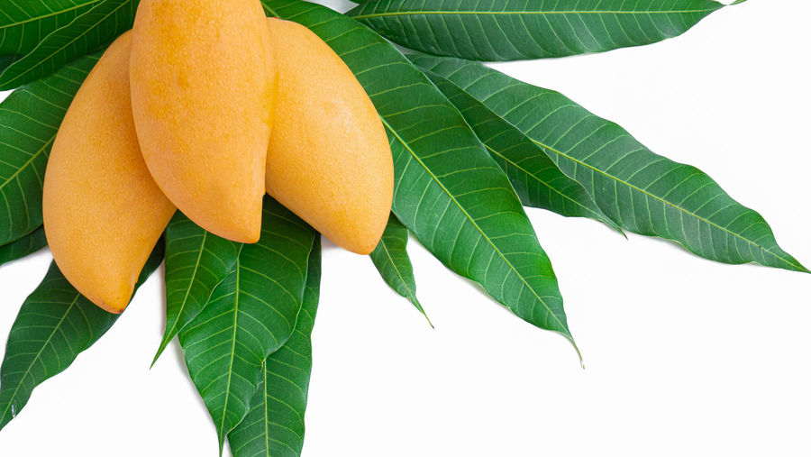 Close-up of orange leaves against white background