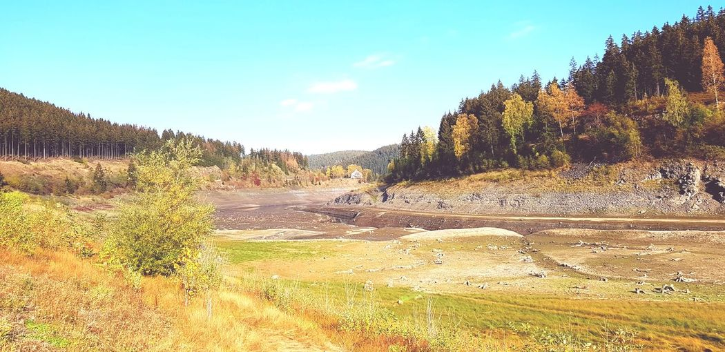Stausee Harz Mountains, Germany Tree Pinaceae Pine Tree Sky Landscape Plant Arid Landscape Geology Physical Geography Natural Landmark