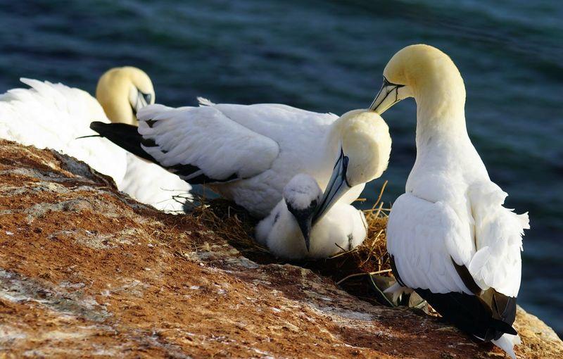 Bird Swan Beach