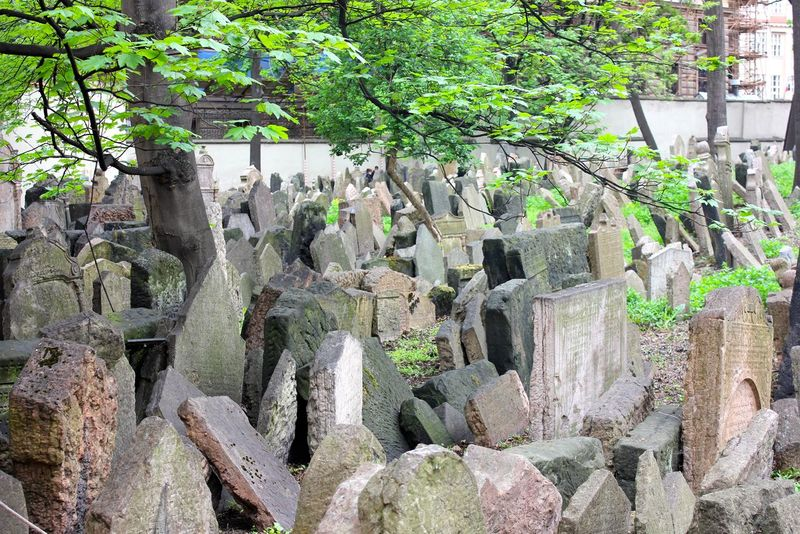Cemetery Old Jewish Quarter Beauty In Nature Close-up Day Green Color Growth Nature No People Old Jewish Cemetery Outdoors Plant Rock - Object Tree