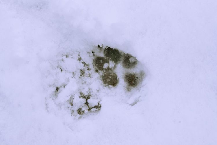 Winter Snow Cold Temperature Nature No People White Color Beauty In Nature Plant Day Covering Backgrounds High Angle View Outdoors Land Full Frame Tranquility Directly Above Close-up Frozen Powder Snow Snowing Paw Print Track - Imprint
