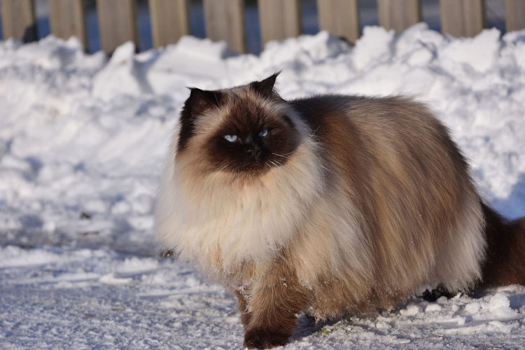 Close-up of cat on snow covered field