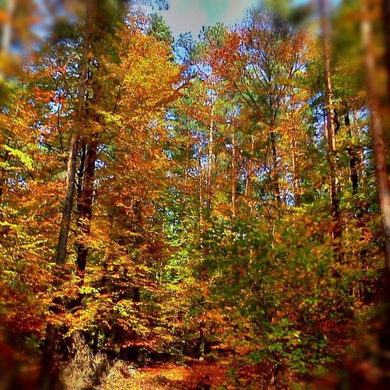 Herbst Obernburg Eisenbach Walk wald