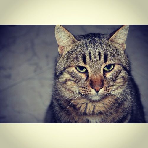 PhotoByMe Photo Ph Images Gatto Meow Zampe Occhi Verdi Gialli Sguardo  Animale Animals Scatto Scatti