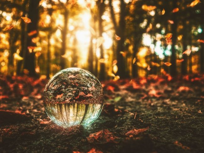 I see autumn in my crystal ball Lens Ball Lensball Autumn Autumn Leaves Autumn Collection Tree Illuminated Forest Shiny Fall Sphere Crystal Ball