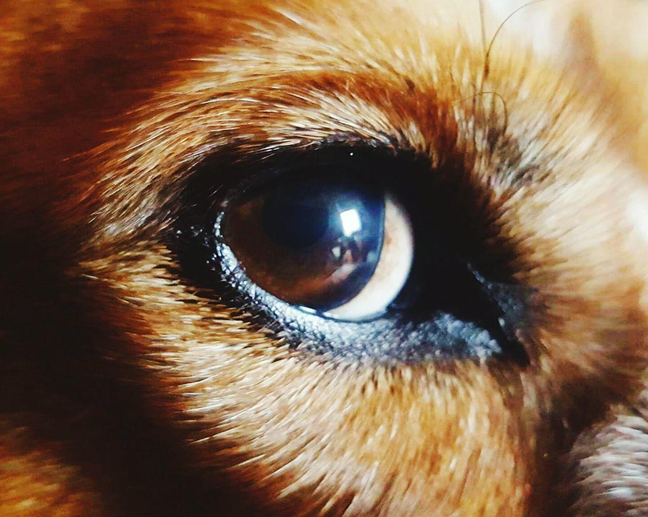 one animal, animal themes, close-up, pets, no people, domestic animals, mammal, animals in the wild, portrait, outdoors, eyeball, day, eyesight, nature, bird of prey