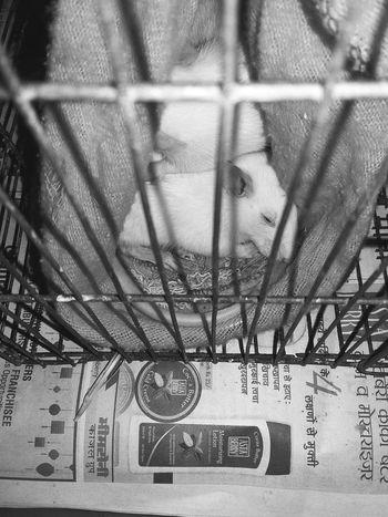 Freelance Life Animal Love Pet Photography  White Mouse EyeEm Animal Lover Awesomepic